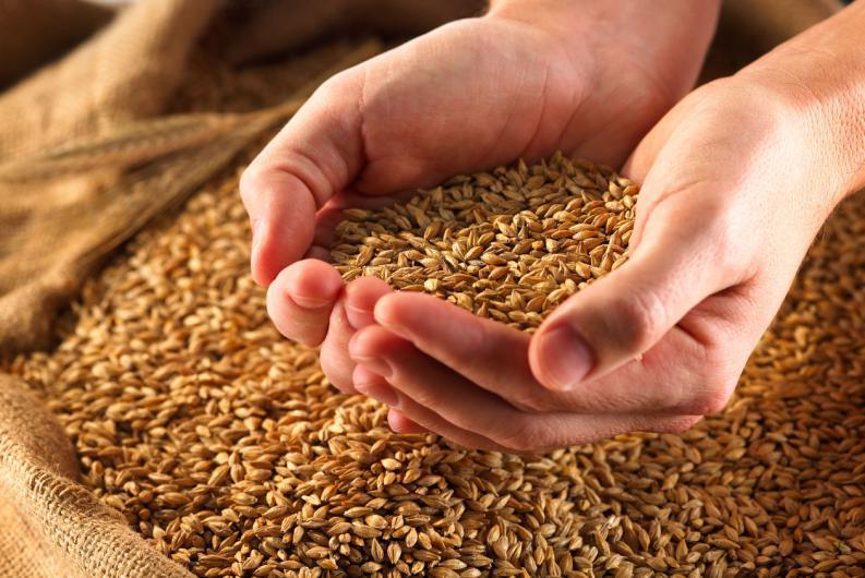 Beneficios del selenio en una alimentación sana