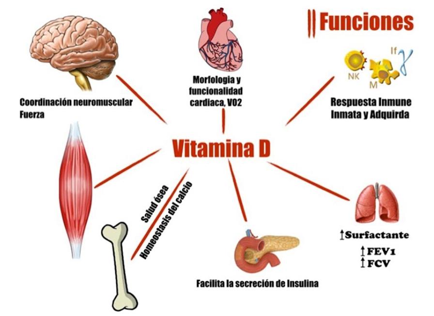 La vitamina D y los resfriados