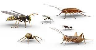 como prevenir y tratar las picadas de insectos